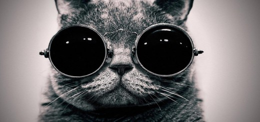 cat-with-glasses